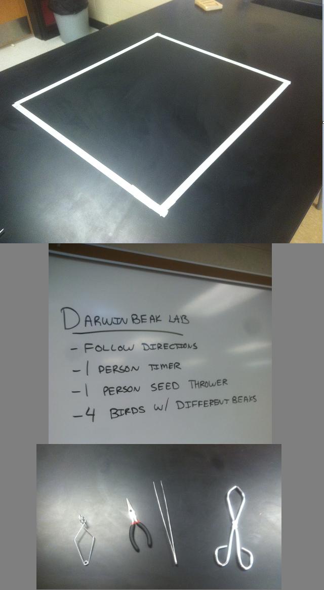 Darwin Finch Beak Lab | High school biology, Biology classroom