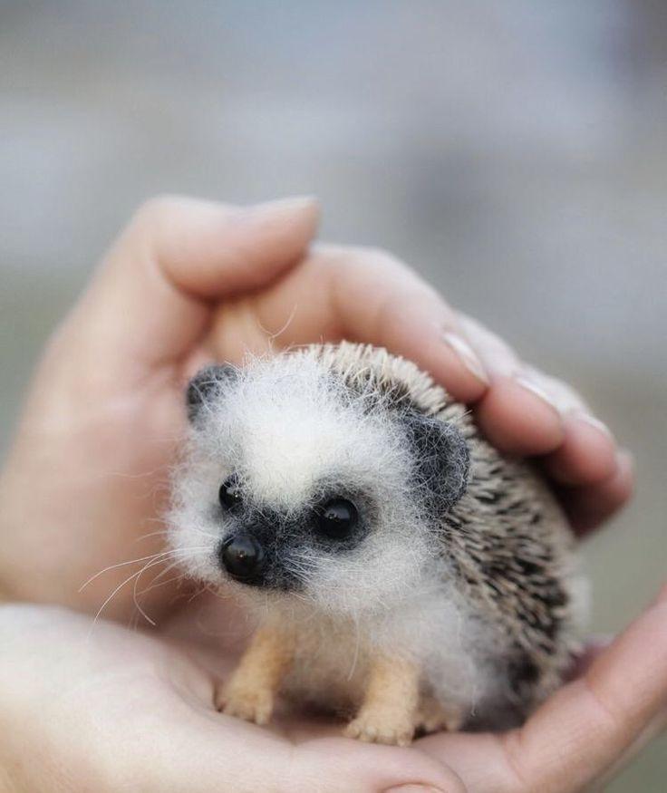 Niedliche Tierbabys, die dich zum Aww bringen #cuteanimals
