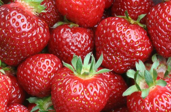 Albion Strawberry Plants Strawberry Strawberry Plants Organic Plants