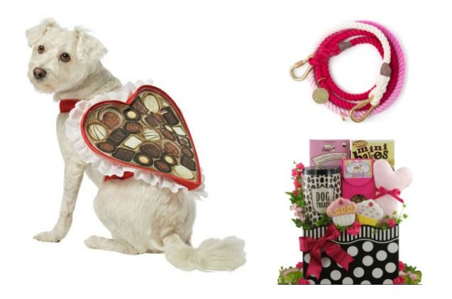 a4a0f48ca21f Show your dog just how much you love him this Valentine's Day with these  cupid-inspired gifts.
