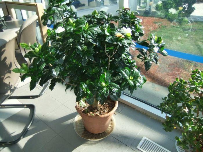 Bl hende zimmerpflanzen f r einen magischen und frischen duft for Zimmerpflanzen wohnzimmer