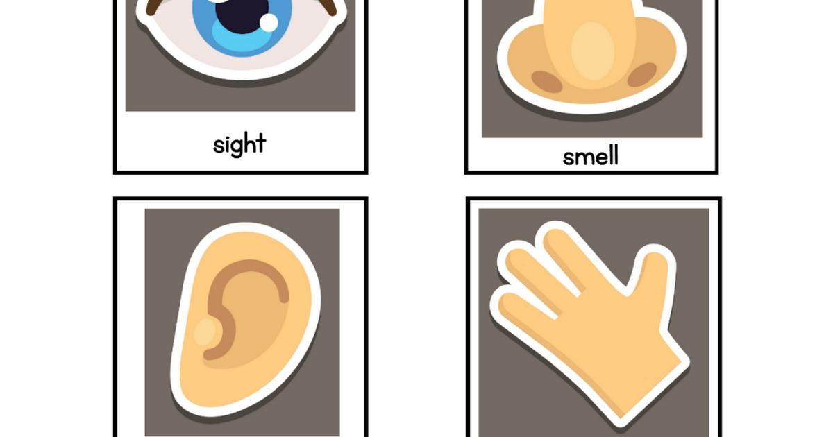 photo about 5 Senses Printable identify 5 Senses Printable.pdf really feel 17 Printables, Facial area, physique, Pdf