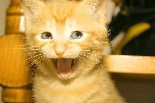 Pin By Cuteopia On Kitties Think They Re In Charge Funny Cat Faces Funny Cat Videos Cute Funny Animals