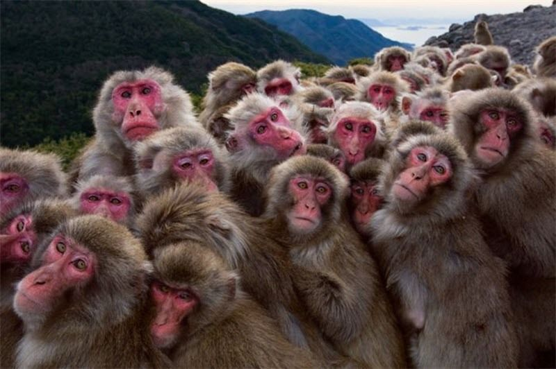 Смешные фото для группы