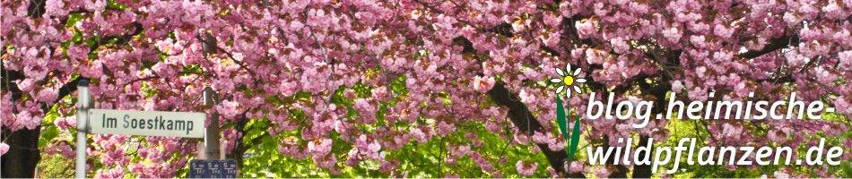 Heimische-Wildpflanzen.de - Das Blog »