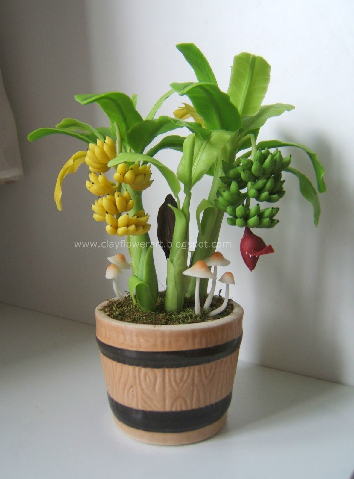 Miniature Banana Plant Banana Plants Miniature Fruit Trees Plants