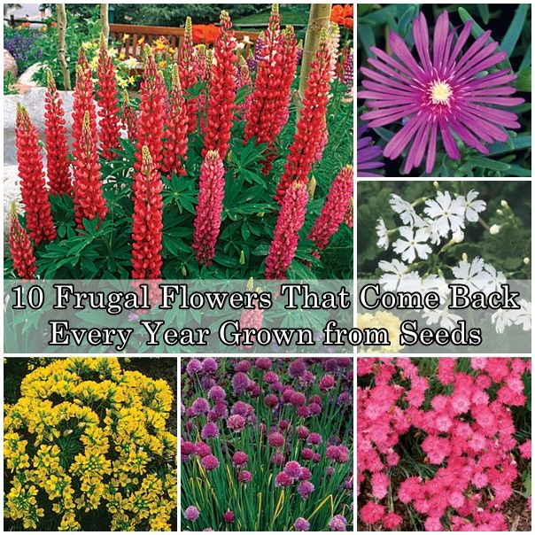 10 Frugal Flowers That Come Back Every Year Grown From Seeds Planting Flowers Trendy Plants Growing Flowers