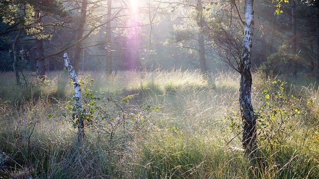 Zonnestralen   Flickr - Photo Sharing!