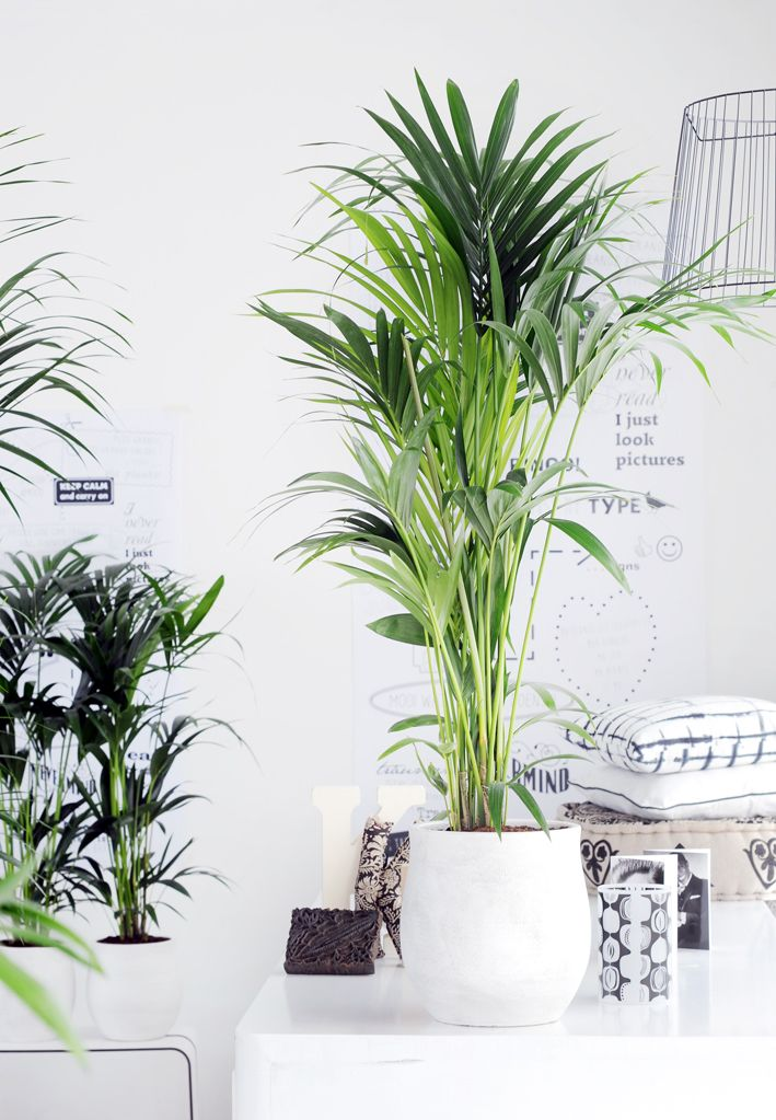 die richtige zimmerpflanze f r das schlafzimmer house. Black Bedroom Furniture Sets. Home Design Ideas