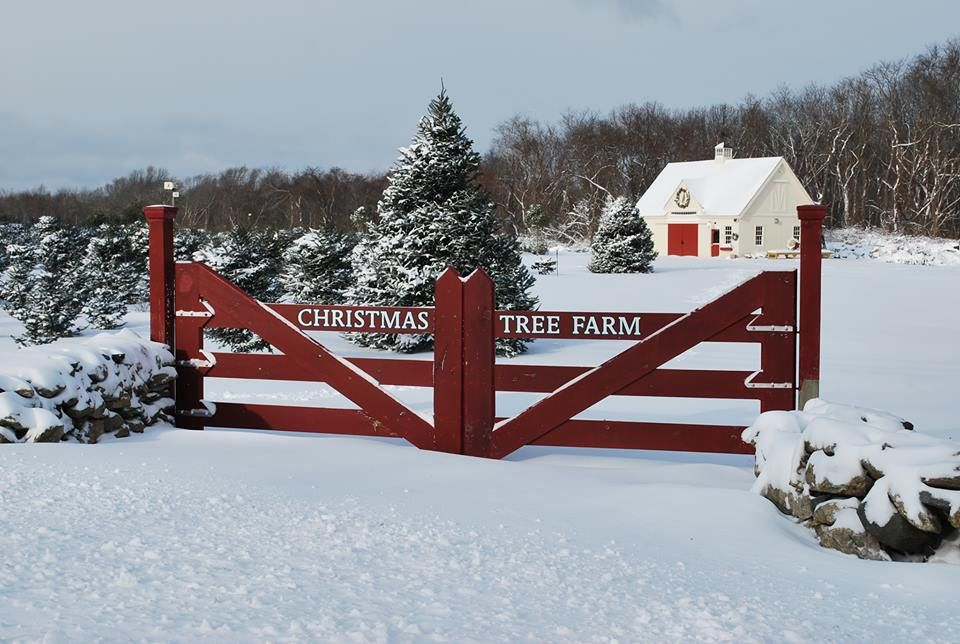 Pin By Tonette B On Fun Photo Session Ideas And Poses Christmas Photoshoot Tree Farm Photo Shoot Holiday Photoshoot