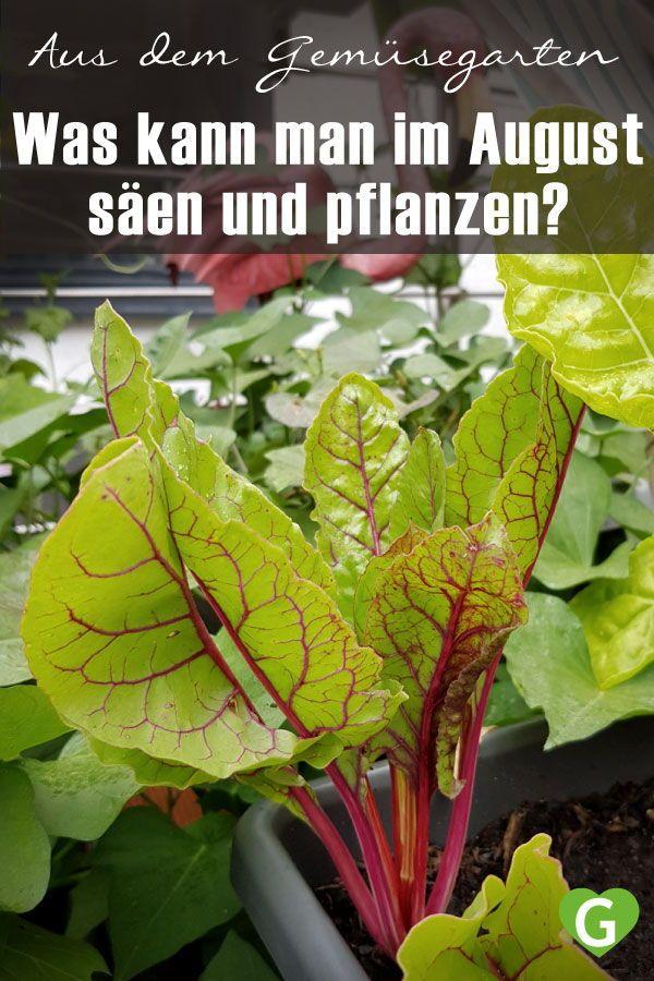 Photo of Welches Gemüse kann man für den Herbst im August säen?