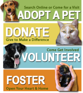 How To Start An Animal Rescue And Or Help Homeless Pets In