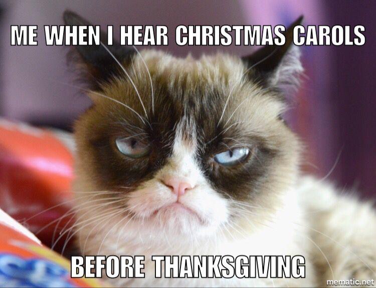 1c6c1d5ae1ea3838613dc381d4196376 one holiday at a time! funny animals pinterest grumpy cat