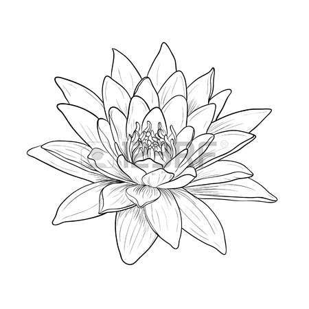 Lotus Flower Tattoo Designs Floral Water Lily Vector Line Style