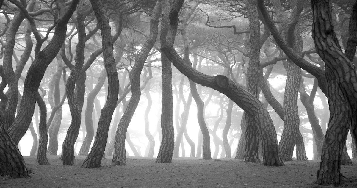 Misty pine Forest   경주 소나무숲