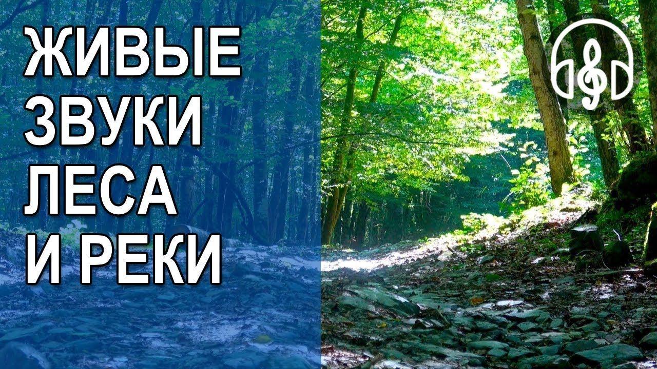 Звуки русского леса скачать бесплатно
