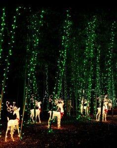 1c6d2e0c1b98cd23a11b2033c8bebdbf - Savannah Botanical Gardens Christmas Lights 2018