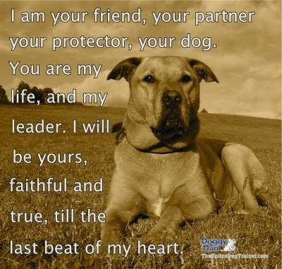 I am your FRIEND, your PROTECTOR, your dog. You are my ...