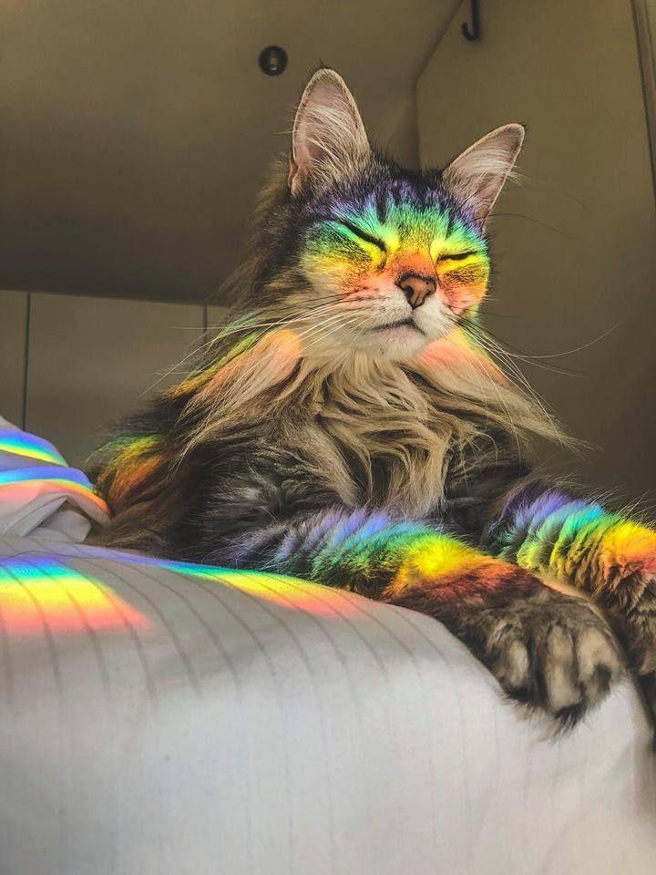 Photo of 22 gatos que tomaron decisiones de vida muy, muy pobres – gatos – Katzen