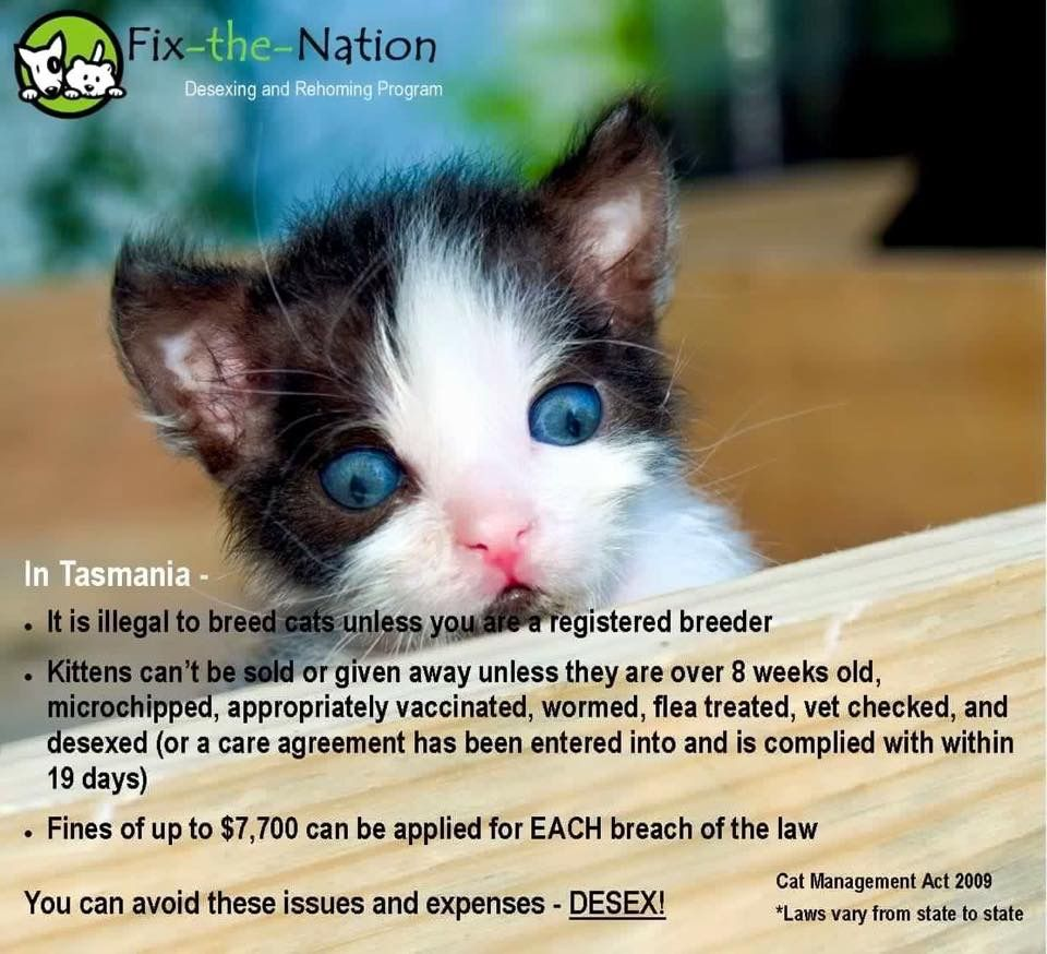 Pin By Sue Pate On Australia Rehoming Kittens Vets