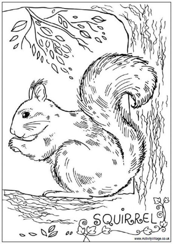 Realistic Squirrel coloring pages for adults | Animal Coloring Pages ...