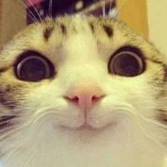 Turn That Frown Upside Down 26 Animals That Will Make Your Face Hurt Awww Funny Animal Pictures