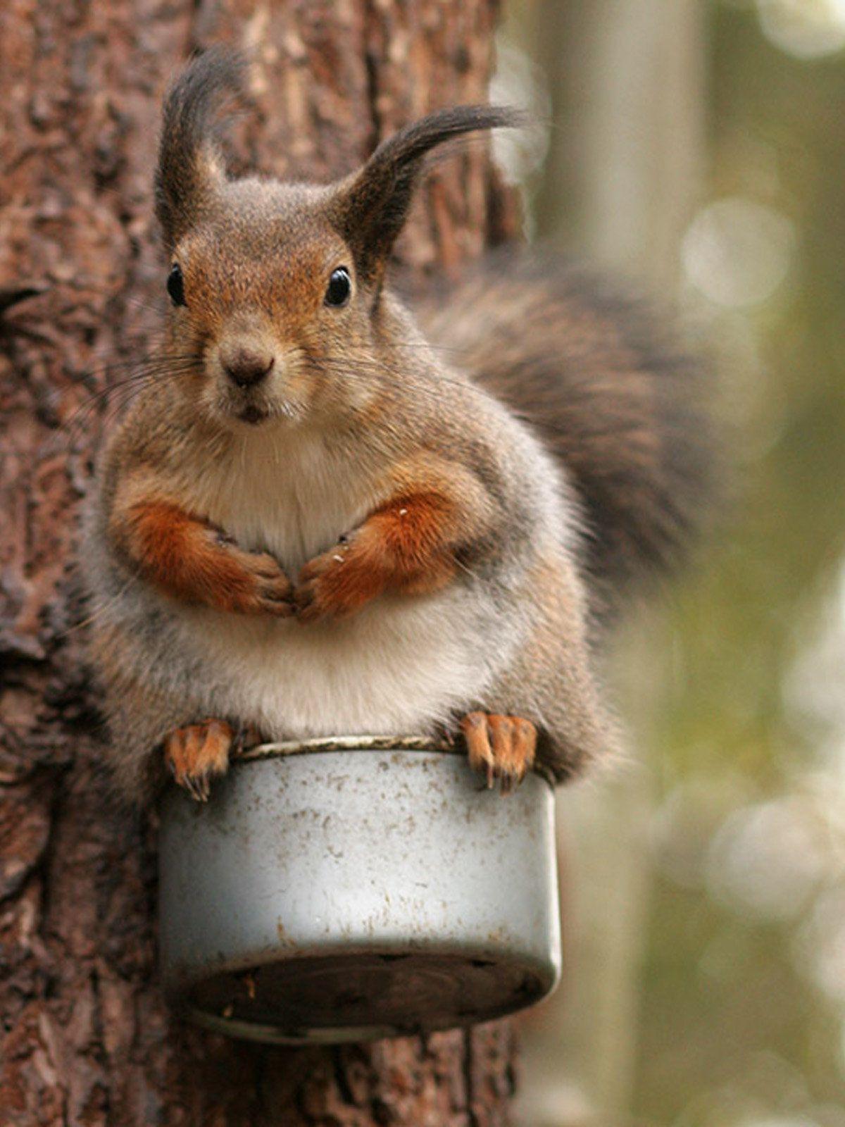 Смешные картинки животных с белками