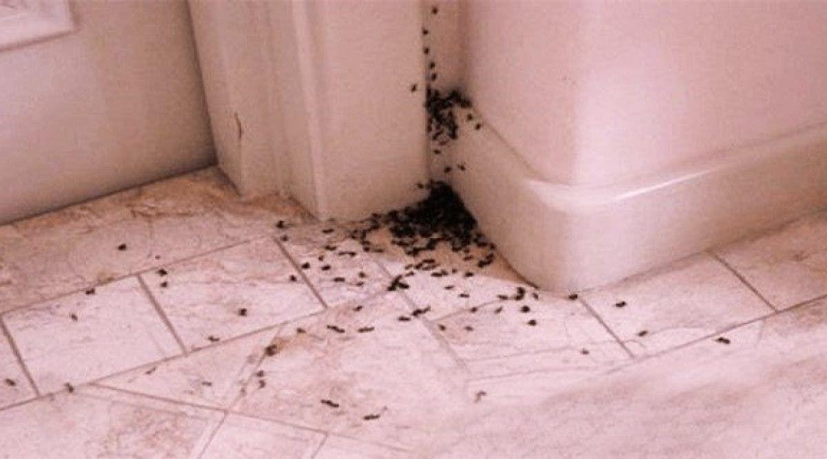 Débarrassez votre maison des fourmis naturellement !