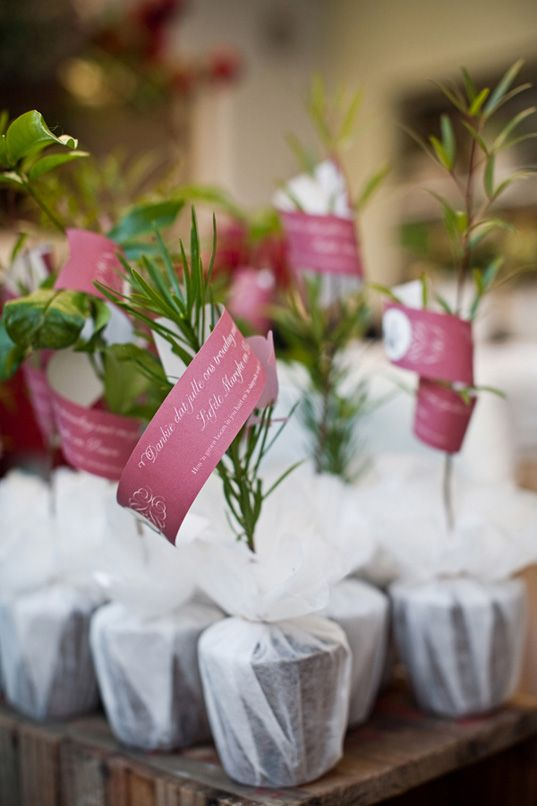 Go Green And Impress Your Guests With Miniature Herb Plants As Take