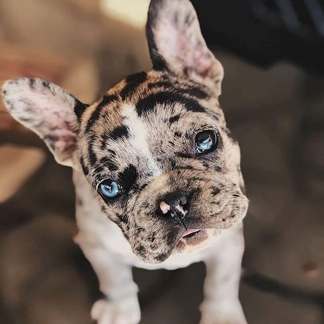 Pin By Kristin Nicole Berg On Bulldog Cute Dogs And Puppies