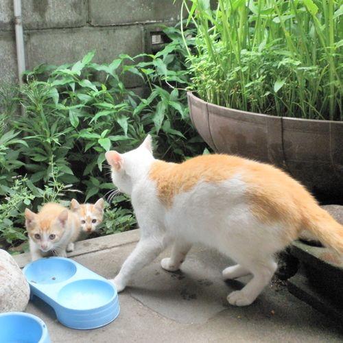 「猫」のブログ記事一覧-砂浜さんぽ