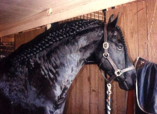 Show Horses and their Beautiful Mane Braids | Books Worth