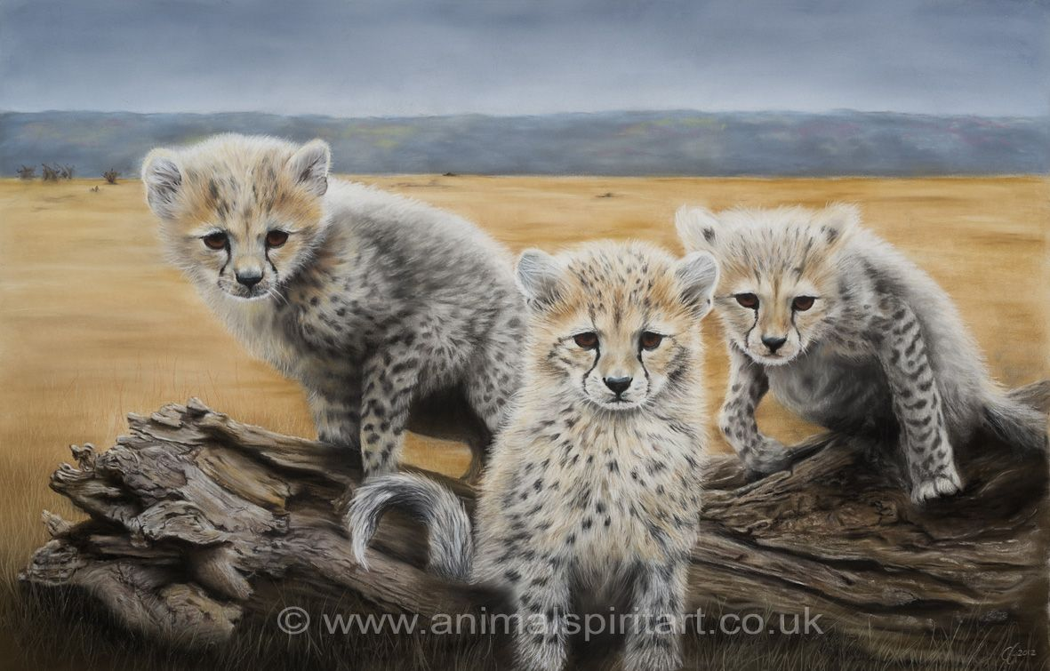 Who Goes There? Limited edition fine art print of cheetah cubs to ...