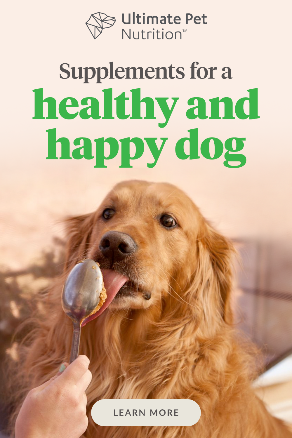 Add This To Your Dog S Food To Help Them Be Healthier Cutepetdogs