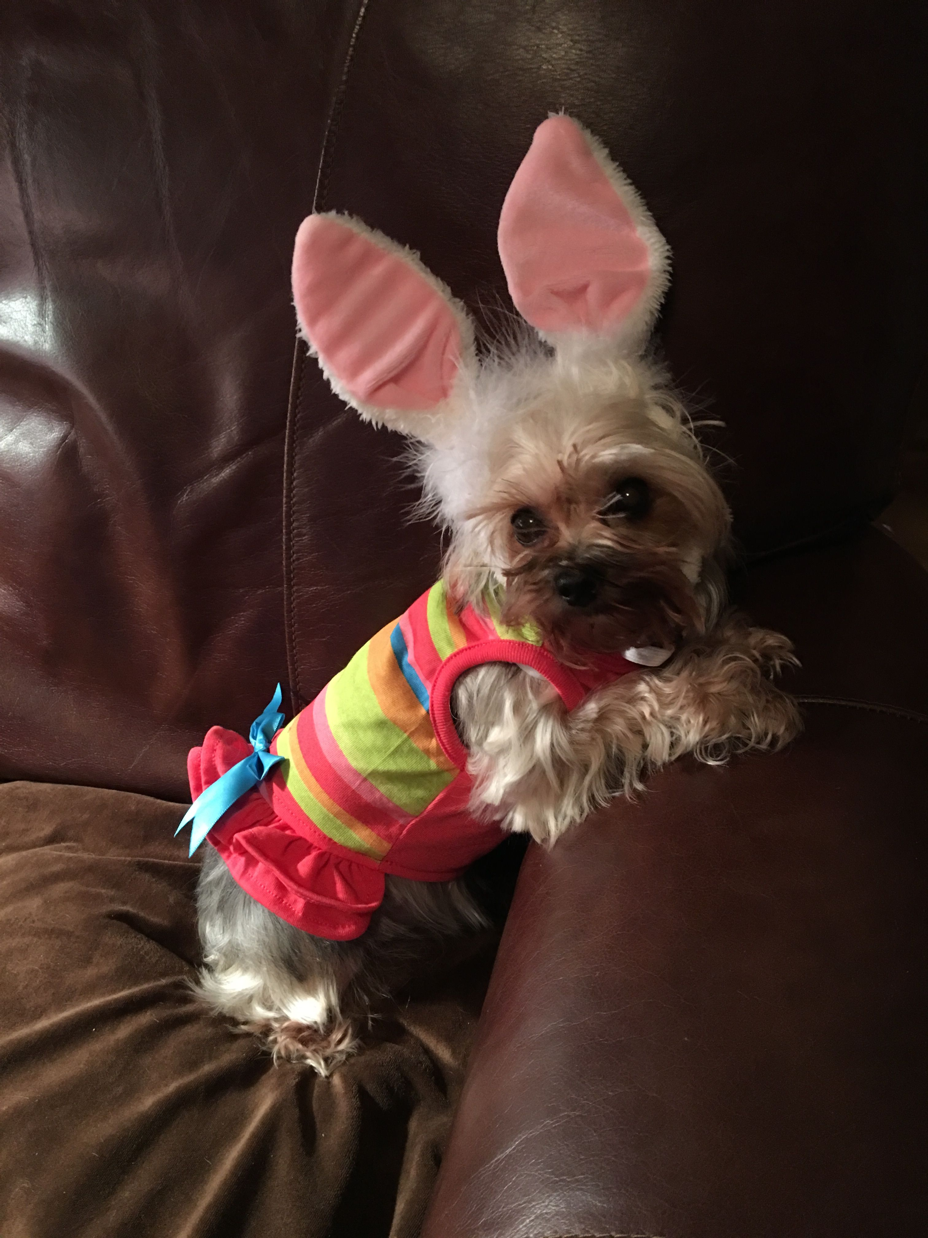 Happy easter dogs animals happy easter