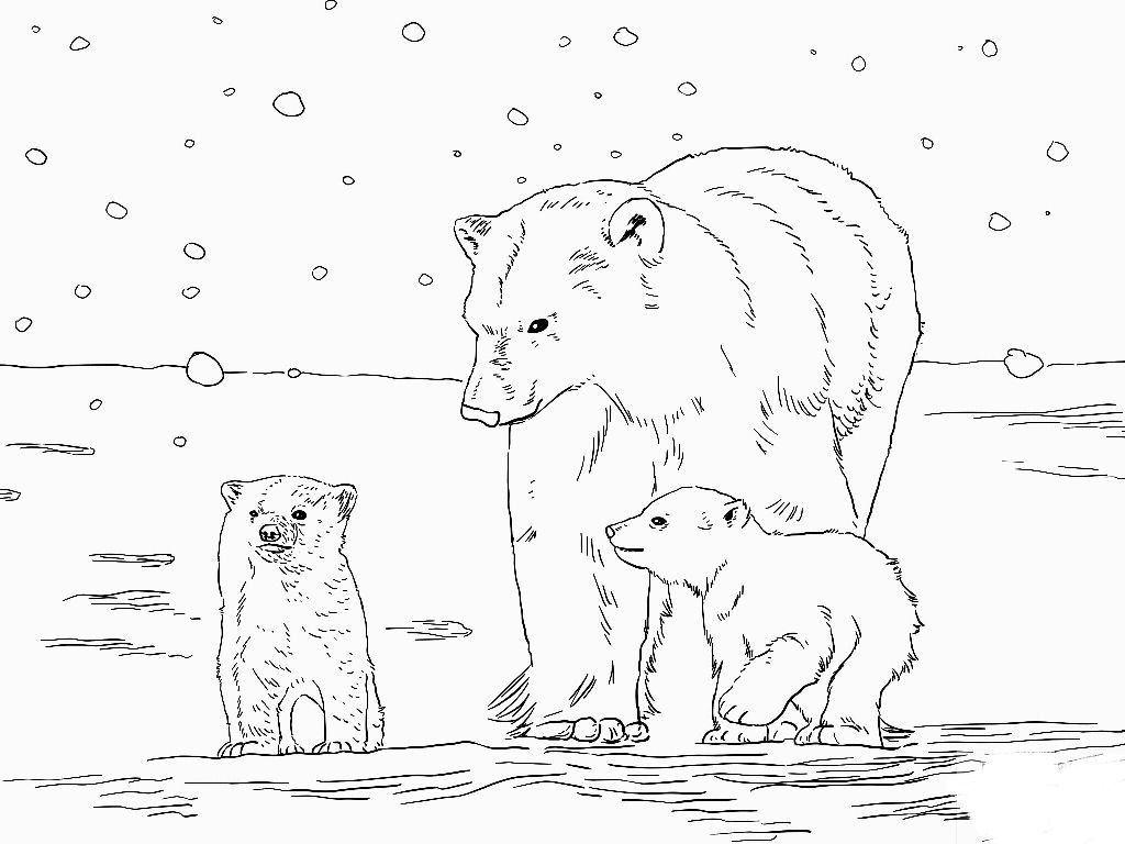 Polar Bear Coloring Pages Ba Polar Bear Coloring Sheet