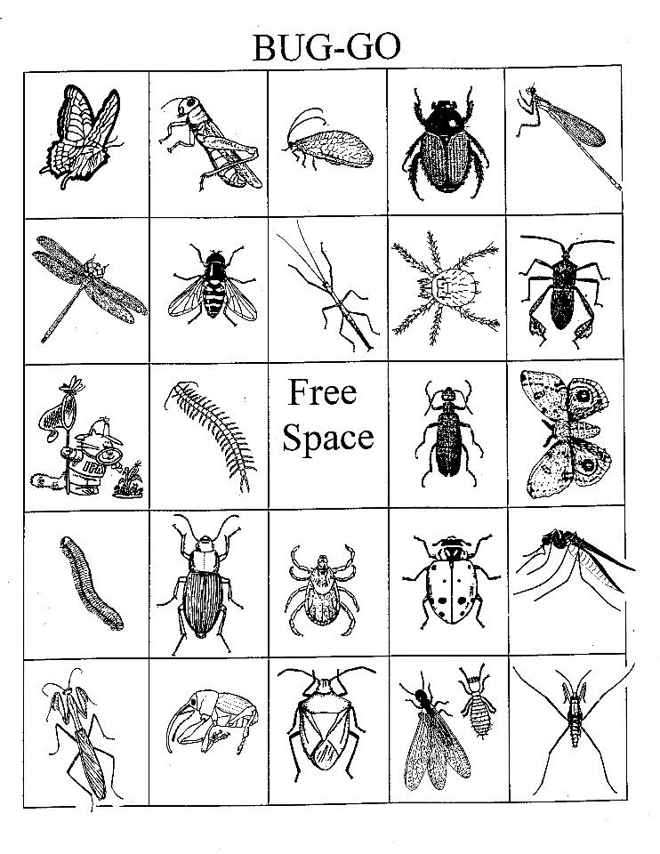 image relating to Insect Printable known as Bug Bingo My Ridiculous Cadettes Bingo playing cards, Bingo game titles, Bingo