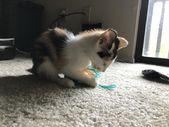 Un amigo mío la encontró en el motor de su auto Ella es alérgica a los gatos para que ella pueda   Cute Cats