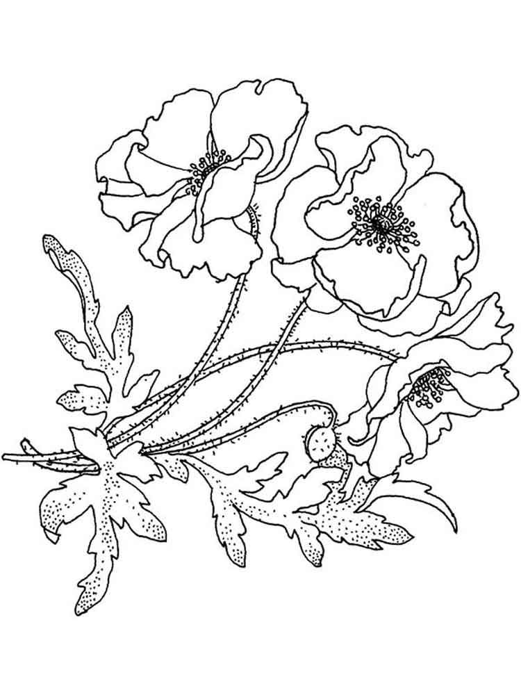 Poppy Flower Coloring Pages 17 Jpg 750 1000 Poppy Coloring Page Poppy Flower Drawing Poppy Drawing