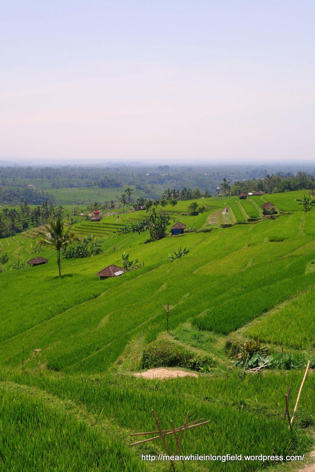 Jatiluwih rice terrace Ubud Bali