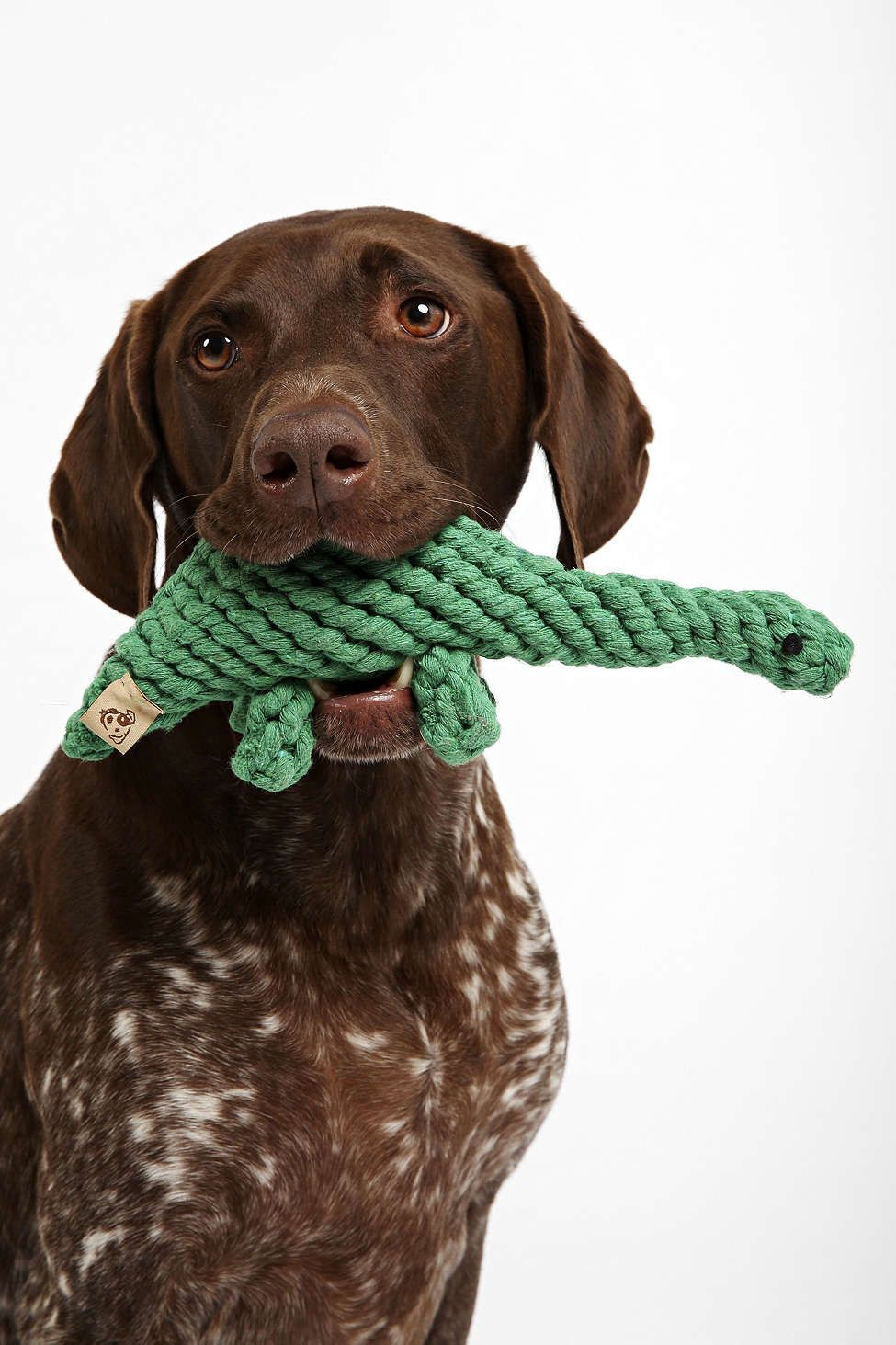 Jax Bones Dinosaur Rope Dog Toy For My Future Real Dog Dog