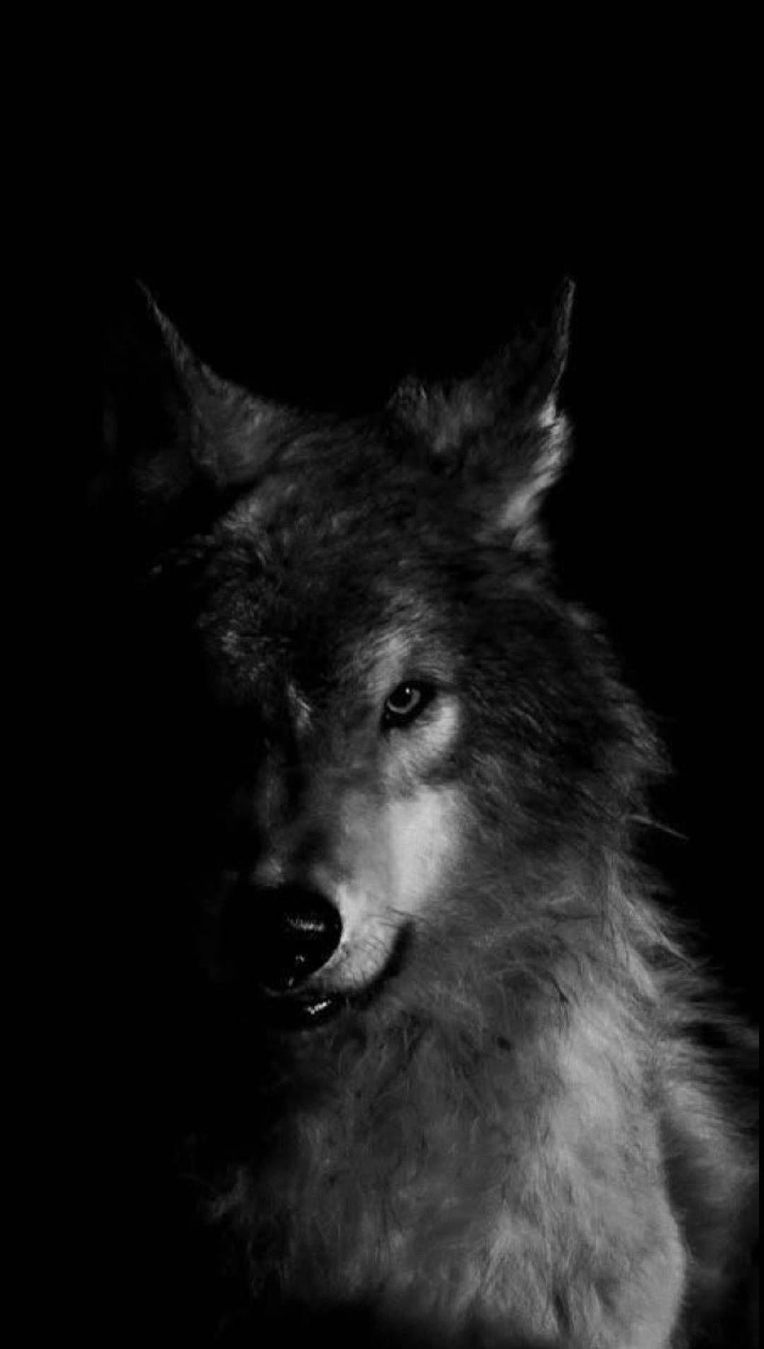 Epingle Par Janka Dugelova Sur Wolf En 2020 Peinture De Loup Modele De Tatouage Loup Comment Dessiner Un Chien