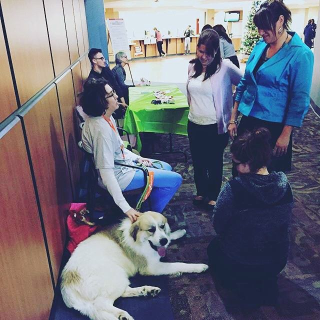 Heads Up There Are Puppies At Ccac West Hills Center Today