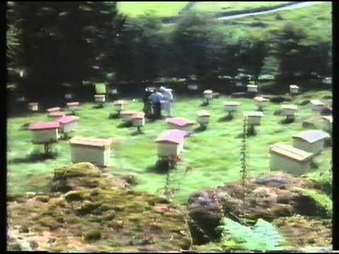 ▶ De Bijentuin Van Buckfast Abbey - YouTube