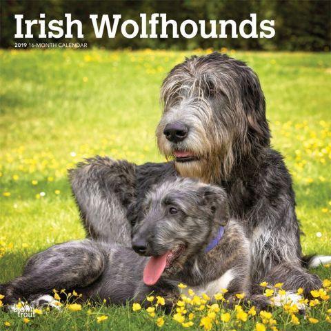 Irish Wolfhounds 2019 Calendar The shaggy-coated Irish Wolfhound