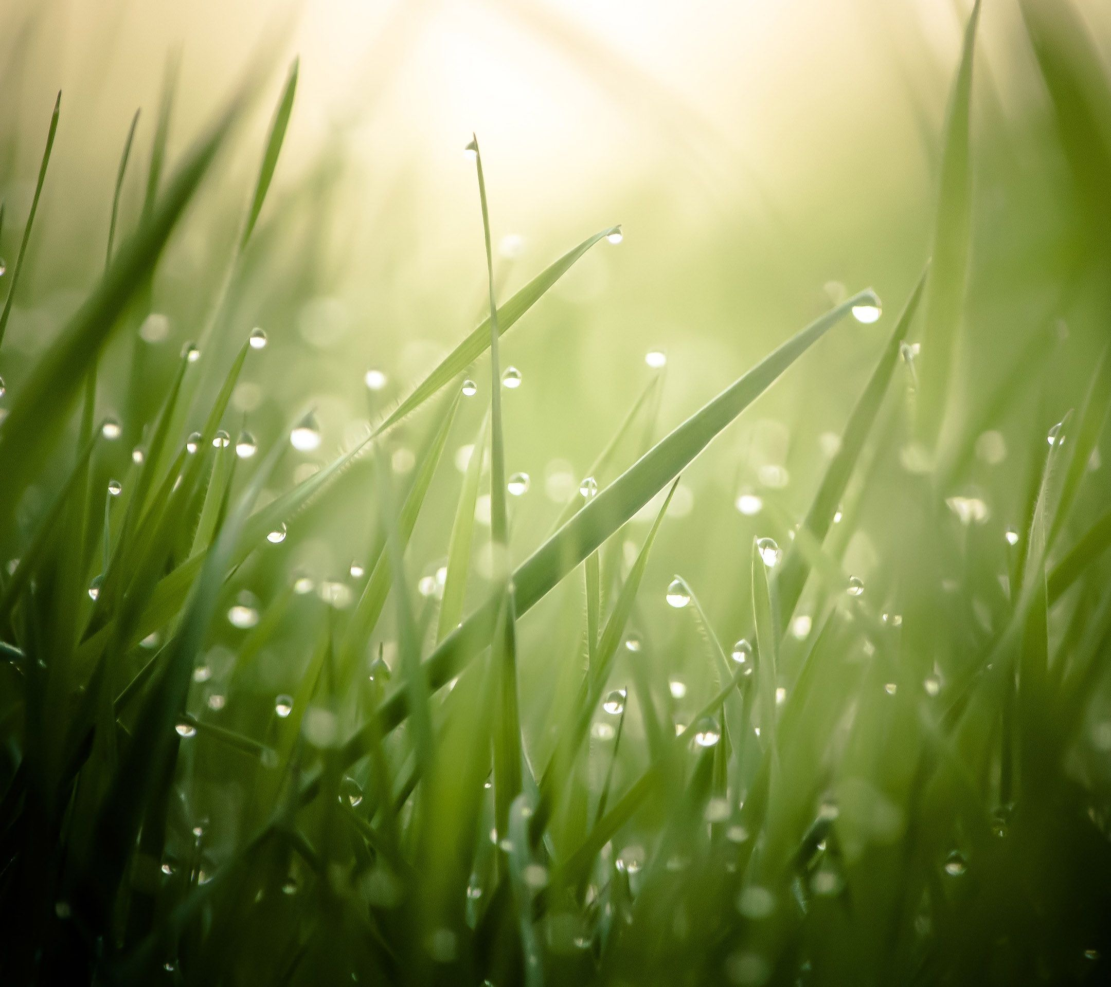 Beautiful Nature Wallpaper For Android: Nature Water Drop And Morning Dew. Tap To See More