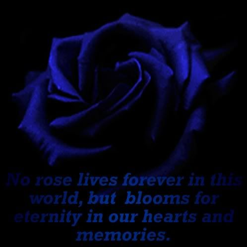 Black Roses Blue And Black Roses Places To Visit