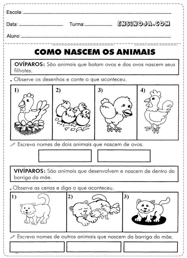 atividade de ciências 1 ano os animais com exercícios que falam