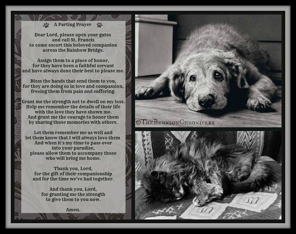 """Dog Poem """"Guard that bridge until I can join you, my"""