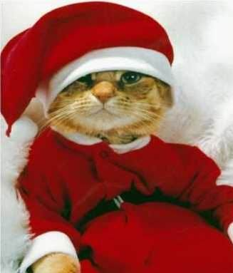 Cat in costumes | ... Here are some cats and dogs in Santa outfits to make  it even better - Cat In Costumes Here Are Some Cats And Dogs In Santa Outfits